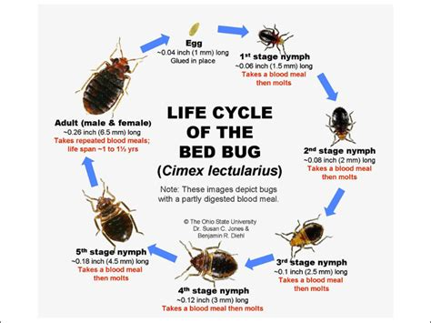 Bugs Found In Beds Bed Bug Facts Know Them All Bed Bug Guide