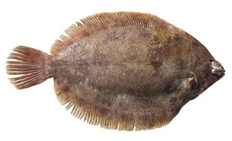 cuisiner limande les poissons cuisine 224 l ouest