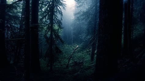 darkness beautiful dark themes dark forest wallpapers images natures wallpapers