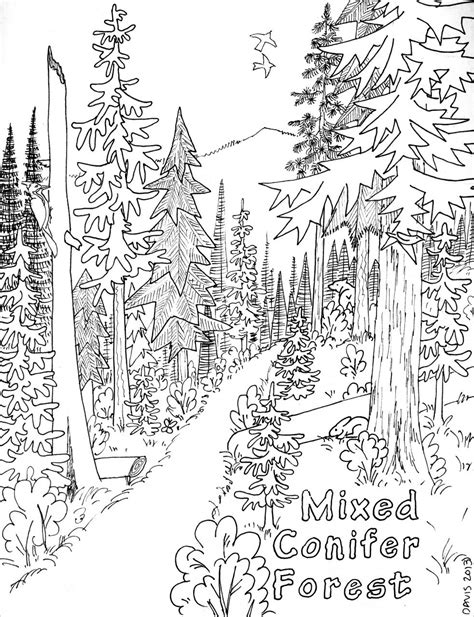 coniferous forest coloring page coloring page for kids