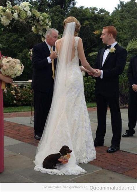 imagenes graciosas boda llevar 161 qu 233 animalada las fotos los v 237 deos y los