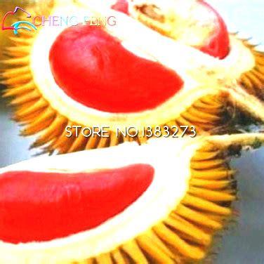 Durian 5pcs popular durian buy cheap durian lots from china durian