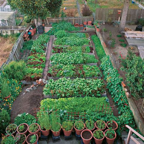931 Best Garden Delights Vegetables Images On Pinterest San Diego Vegetable Gardening