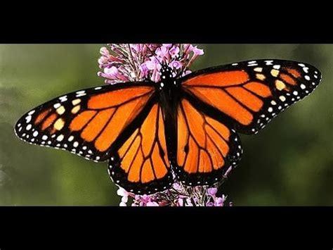 imagenes de mariposas que brillen so 209 ar con mariposa significado de los sue 209 os