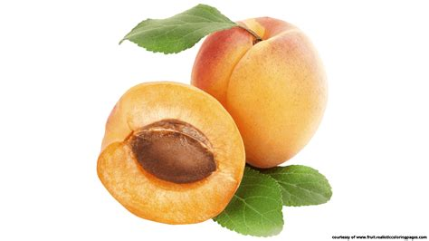 clipart free images downloads 7 apricot royalty free clipart fruit names a z