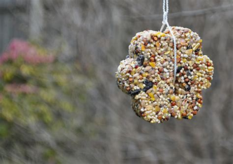 kids craft diy bird seed feeders we know stuff
