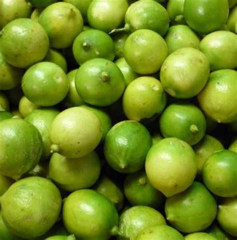 tanaman jeruk lemon lokal bibitbungacom