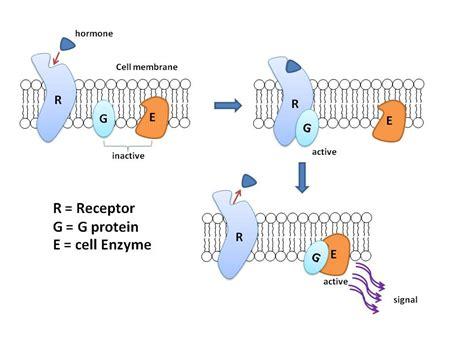g protein q structural biochemistry g proteins wikibooks open books