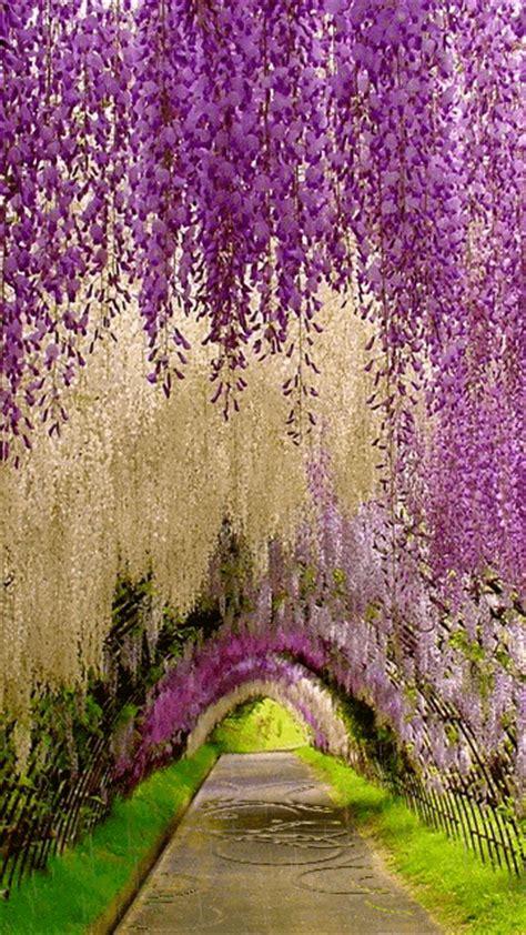 imagenes de paisajes bonitos con movimiento impresionantes im 225 genes de paisajes en movimiento gifs de