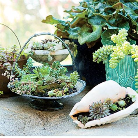 cute indoor succulent plant decor ideas  beautify