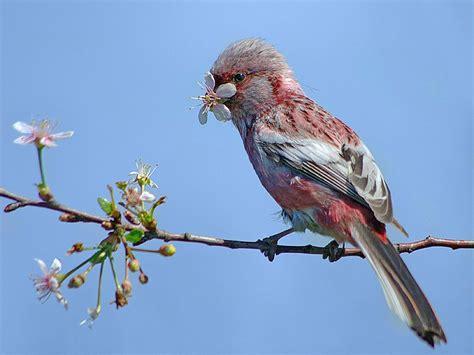 wallpaper flower and birds wallpaper birds and flowers wallpapersafari