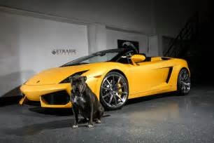 Lamborghini Gallardo Giallo Midas Lamborghini Gallardo Spyder With Strasse