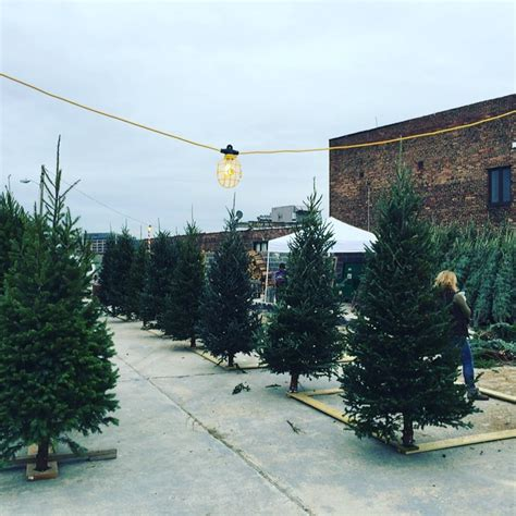 28 best starting a christmas tree lot business file