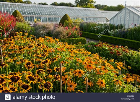 cut flower gardens cut flowers rows growing west dean walled garden sussex