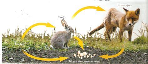 imagenes de animales autotrofos unidad 4 transferencia de materia y energ 237 a