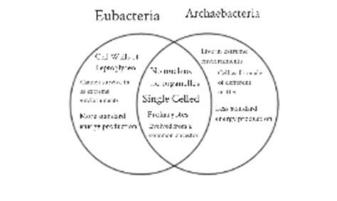 archaebacteria vs eubacteria venn diagram eubacteria vs archaebacteria venn diagram by alec