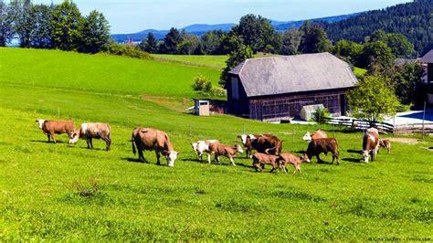 imagenes de viviendas urbanas y rurales kuhkaff wort der woche dw 03 10 2011