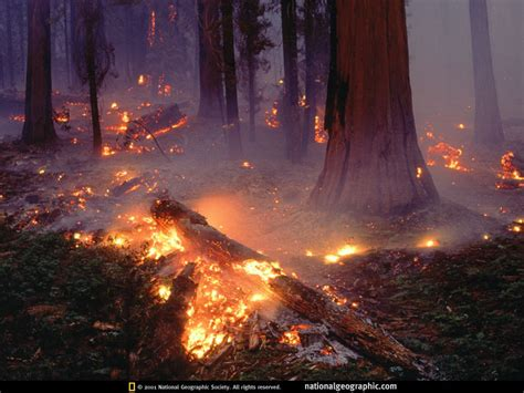 wallpaper bencana alam forest fires