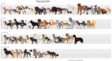 types of dogs chart large breed chart gallery