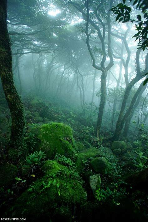 mystical forest photography dark nature green forest foggy