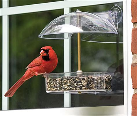 duncraft com droll yankees winner window feeder