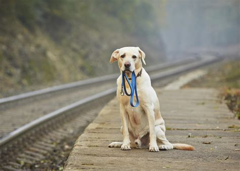 unexpectedly effective ideas  cheer   depressed dog