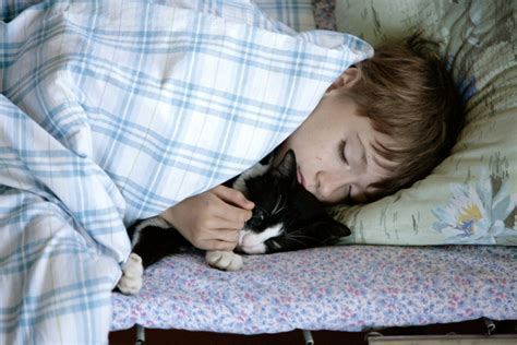 6 reasons why your cat wakes you up at catster