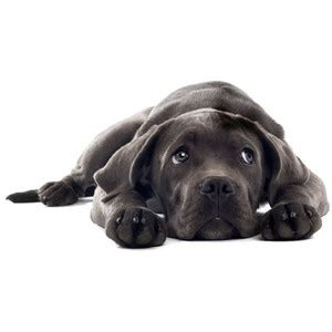 how to your puppy to stay easy way to a to stay