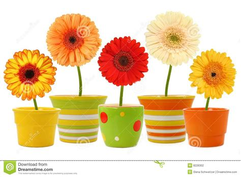 images of 6 flowers in pots flowers in pots stock photography image 8226302
