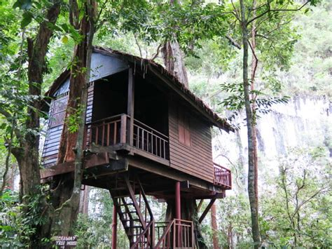 our jungle house our jungle house review 183 moo 6 khlong sok khao sok national park