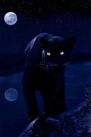 panther animal wildlife