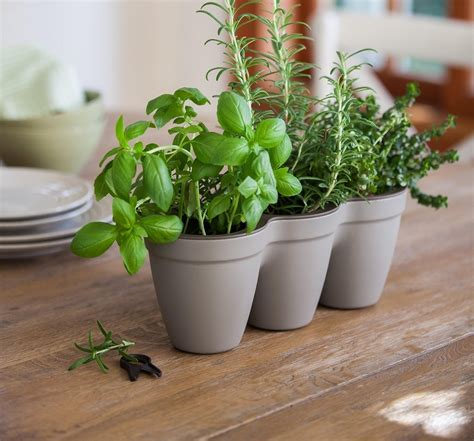 herbs planter ivy herb planter grey maze products
