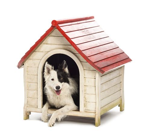 in house dog kennel tips for building a fantastic doghouse mobile dog grooming