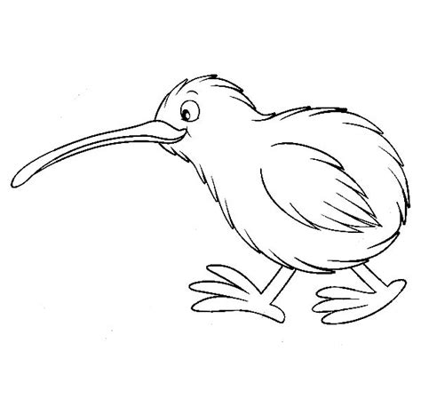 Kiwi Bird Drawing Outline by Kiwi Bird Drawing Outline
