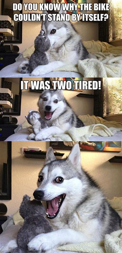 husky and dog faces dump a day funny pictures of the day