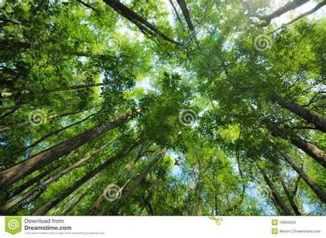 Photo Lookup Forest Canopy Lookup Stock Photos Image 19894223