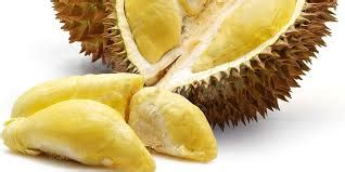 Bibit Durian Musang King Palembang bibit durian monthong bawor aceh pusat bibit durian
