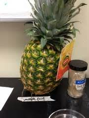 a fruit is a ripened quizlet gymnosperms and angiosperms flashcards quizlet
