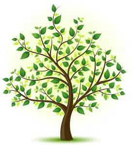 environmentally friendly trees an eco resort mountain splendour