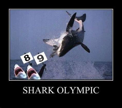 Funny Shark Meme - funny sharks shark week and sharks on pinterest