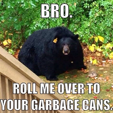 Bears Meme - big fat simsbury bear probably too full to eat you ct boom