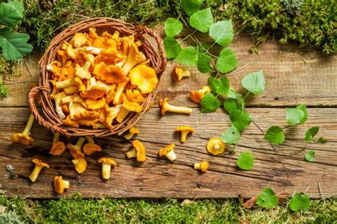 come cucinare funghi porcini freschi come cucinare i funghi agrodolce