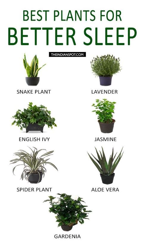 best plants for apartment air quality 85 best images about indoor plant ideas on pinterest