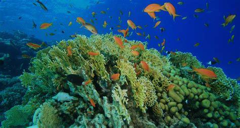 Imagenes De La Vida Marina   el peligro para la vida marina educaci 243 n global para una
