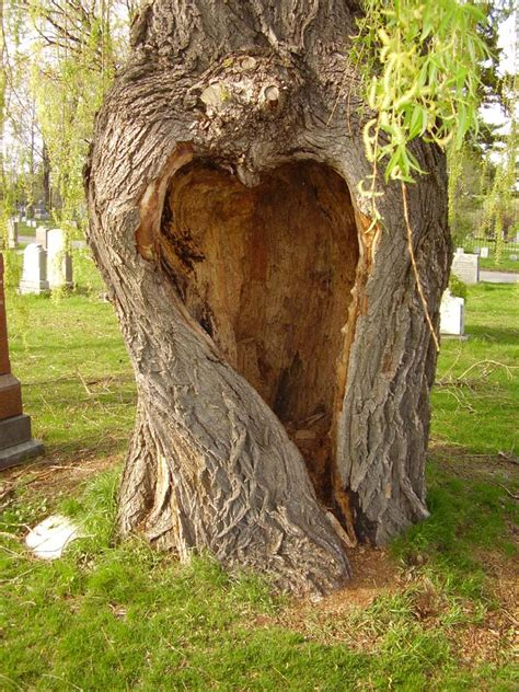 images of love tree love tree new serie pic 8 by cosmiksquirelstock on deviantart