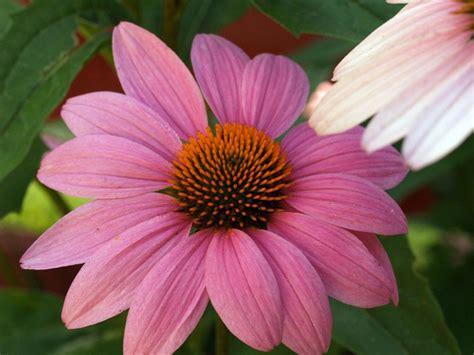 floreros para una flor partes de una flor plantas
