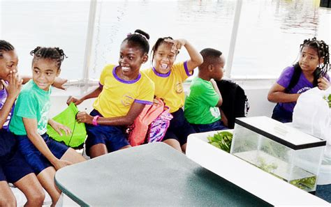 prospect primary students explore mangroves cayman compass