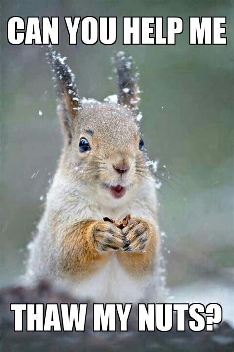 Squirrel Nuts Meme - 1000 images about memes on pinterest bullets rebel