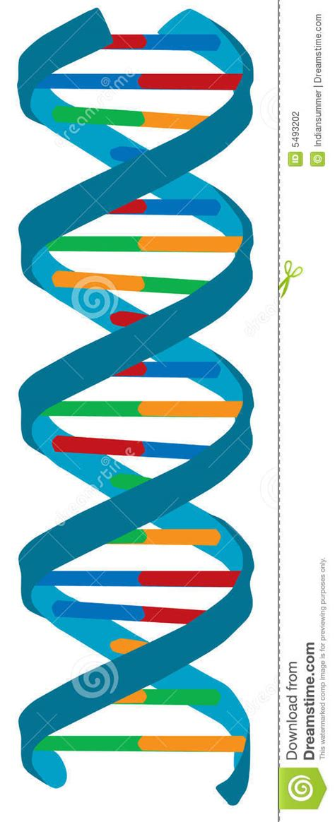 dna colors dna color illustration isolated stock photography image