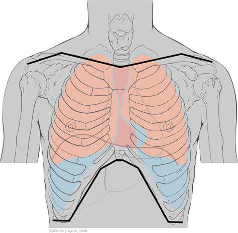 organi gabbia toracica torace